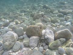GOPR6831 (winglet777) Tags: sea vacation croatia arena kanal pula hrvatska istra kroatien limski brijuni kamenjak istrien gopro hero3 sonyrx100