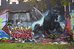 FUMING GORILLAS (STILSAYN) Tags: california graffiti oakland bay east area gorillas fuming 2016