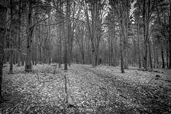 treesbw (Steve J Cottis) Tags: winter wild england snow kent frost knolepark tokina1116mm28 nikond5300