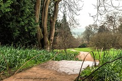 The Road To Where? ... (Jackie Matthews Photography) Tags: winter tree rain path arboretum cotswolds february daffodils leadinglines batsfordarboretum