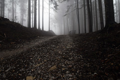 DSC_0512_m (GiacomoMaria  ') Tags: wood panorama fog forest landscape toscana nebbia bosco foresta panorami vallombrosa pivi reggello