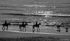 paseo a caballo (Franreme) Tags: canon atardecer arena cadiz 5d playas rocas tarifa roja costas