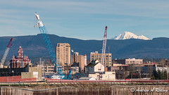 waterfront and Koma Kulshan (Andrew Reding) Tags: mountbaker oldcityhall bellinghamtowers