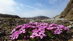 Kulusuk Island (alexandre.lavrov) Tags: arctic greenland tundra grnland kulusuk arcticsummer eastgreenland kulusukisland