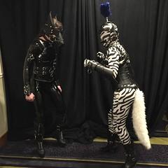 Two Ponies -3 (AgentDrow) Tags: black sexy tail bondage bdsm pony zebra latex corset pvc zentai ponyplay