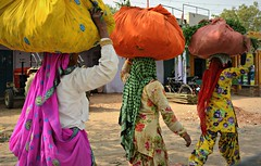 Coloured women (Scossadream) Tags: door light woman india elephant colour bus brick stone kids children temple kid women squirrel gallery desert fort shepherd balcony delhi indian faith swastika flock plate flamingos palace camel mausoleum dome spacemonkey worker superstition bikaner karnimata jaisalmer rajasthan jodhpur redfort humayunstomb jamamasjid smp mehrangarh bluecity mandawa badabagh divinities svastica junagarh thardesert scossa jaswantthada indiangate d7100 worldpeacegong lucaguizzardi spacemonkeypictures nikond7100
