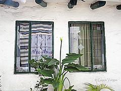 Colombia (Graa Vargas) Tags: flower window colombia bogot graavargas 2016graavargasallrightsreserved