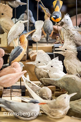 Hand-carved birds in an artist's studio in Pennsylvania. (Remsberg Photos) Tags: wood usa bird art studio artist pennsylvania wildlife craft carver realistic lifelike stahlstown