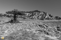 High plains (grimaux.jordan) Tags: summer sky bw white black tree nature grass rock stone landscape plateau dry larzac