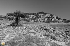 High plains (grimaux.jordan) Tags: summer sky bw white black tree nature grass rock stone landscape plateau dry larzac