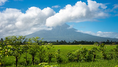 Mayon Volcano (www.lorenzmaophotography.com) Tags: trees clouds nikon rice coconut philippines d750 tall coconuttree tamron bicol ricefields mtmayon legaspi albay tamronlens mayonvolcano lorenzmaophotography nikond750 tamron1530mm tamron1530mmf28vc