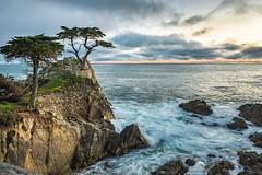 DSC_8555_g (shinglesware) Tags: california ca sunset tree beach water clouds coast monterey rocks waves shore pebblebeach 17miledrive pacificgrove cypresstree d610 lonecypresstree