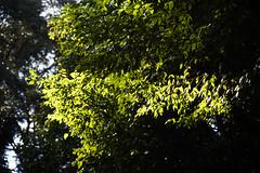 _DSC0684 (Osamu1965) Tags: japan temple spring sony jp     a7m2 af28105f3545d