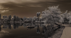 Scene From A Sidewalk At Santee Lakes (Bill Gracey) Tags: trees sky water clouds reflections ir highcontrast surreal palmtrees infrared otherworldly santeelakes infraredphotography convertedinfraredcamera
