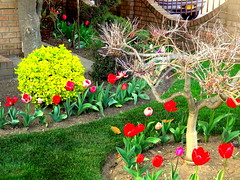 Spring Time. Well-kept Garden (dimaruss34) Tags: newyork flower brooklyn spring image dmitriyfomenko