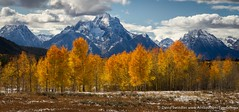 Mt Moran Pano (David Swindler (ActionPhotoTours.com)) Tags: autumn snow mountains color fall fallcolor aspens aspen tetons moran mtmoran
