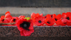 Remembering The Fallen (TopEnd Pik) Tags: coth thegalaxy