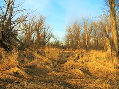 The Golden hour (BreezyWinter) Tags: blue trees light sky grass canon gold spring quote dry goldenhour lifetime magicalmoment margaretbourkewhite