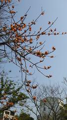 P1050305 (Big Tree Chen) Tags: