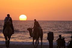Palestinian men on camels at sunset on the beach in Gaza City, (TeamPalestina) Tags: sunset sky sun sunrise landscape landscapes photo am amazing nice photographer natural sweet live palestine comfort sunrays gaza beautifull palestinian  landscapecaptures