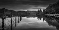 Reflection (Paul S Ewing) Tags: blackandwhite bw reflection tree fence mono still moody loch ard