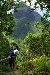 Mt Lidgbird while descending Mt Gower (NettyA) Tags: man landscape person australia hike nsw hiker ropes day6 bushwalk unescoworldheritage descending lordhoweisland 2016 lhi ropework bushwalker mtgower mtlidgbird janetteasche lordhoweforclimate mtgowerclimb