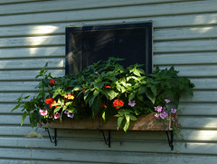 Window box at Reader Rock Garden (annkelliott) Tags: flowers plant canada flower building calgary window nature flora outdoor shed alberta siding windowbox latesummer readerrockgarden annkelliott anneelliott fz40 10september2013