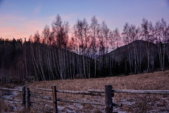 Perfect silence (anna.night) Tags: wood pink blue trees winter light sunset sky plants sun mountains tree nature beautiful mystery forest dark photography frozen photo nikon frost day purple photos branches magic meadow poland polska natura zima drzewa midzygrze d7100