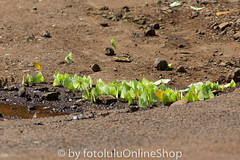 Argentinien_Insekten-68 (fotolulu2012) Tags: tierfoto