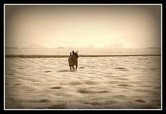 Wintertime (patrick.verstappen) Tags: winter dog pet animal sepia photo google nikon flickr belgium image pat january sigma facebook picassa daiko gingelom ipernity d7100 pinterest ipiccy picmonkey