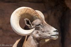 IMG_2993.jpg (ashleyrm) Tags: travel arizona museum sonora desert tucson tucsonarizona