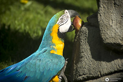 _DSC5697 (alessandro.spagnolli) Tags: zoo ngc natura tamronlens naturalistica lecornelle parcofaunistico sonyalpha77