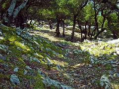 Ikaria's remotest hinterland 48 - inside the ancient oak forest (angeloska) Tags: forest march ikaria aegean greece pezi hinterland hikingtrails   langada    vrakades  opsikarias