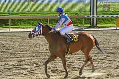 2016-01-03 (47) r3 Lauralea Glaser on #6 Humorous Chant (JLeeFleenor) Tags: photos photography md marylandhorseracing marylandracing laurelpark jockey   jinete  dokej jocheu  jquei okej kilparatsastaja rennreiter fantino    jokey ngi horses thoroughbreds equine equestrian cheval cavalo cavallo cavall caballo pferd paard perd hevonen hest hestur cal kon konj beygir capall ceffyl cuddy yarraman faras alogo soos kuda uma pfeerd koin    hst     ko  winner maryland