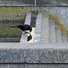 chic beak (weltreisender2000) Tags: park atlanta reflection bird water fountain centennial starling olympic