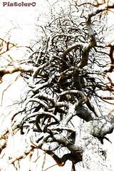 Wildlife Knots (Pistolero79) Tags: wood tree nature modernart natura albero knots legno nodi