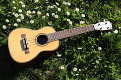 IMG_0257 ( Lettie Photography ) Tags: music sun color nature grass daisies spring colorful ukulele instrument daisy printemps musique sunnyday