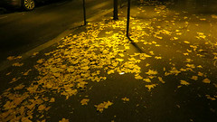 Strip-tease nocturne (Robert Saucier) Tags: street paris leaves night pavement noflash sidewalk striptease rue nuit feuilles trottoir 13e xiii xiiie 13earrondissement