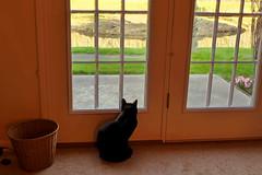 Guaranteed.... (+David+) Tags: andy cat blackcat earlymorning songbirdpond whatcatssee