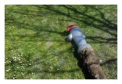 Malade (' m x b c h r) Tags: hydrant