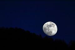 Luna (MILESI FEDERICO) Tags: wild italy moon detail primavera nature nikon europa europe italia details nat natura luna piemonte dettagli alpi piedmont valsusa dettaglio nital valdisusa milesi alpicozie valledisusa d7100 visitpiedmont valliolimpiche nikond7100 milesifederico