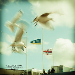"""Mine, Mine"" (Still Dreams Photography) Tags: seagulls colour nature birds vintage flying movement nemo retro motionblur squarecrop thebeach shutterspeed slowshutterspeed theseaside instagramstyle"