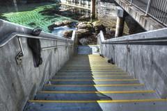 Stairs to the Great Tide Pool (--joe Lach) Tags: water stairs monterey montereybayaquarium stairway pacificocean tidepool montereypeninsula waterpictorial greattidepool joelach surfacescubadiving