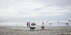 China Beach-3492 (mariskar) Tags: dog canada beach dogs nature beauty vancouverisland labs pacificnorthwest labradorretriever chinabeach westcoast pnw islandlife islandliving explorebcexplorecanada westcoastbeastcoast beastiebuddies