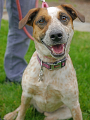 Rollo_04 (AbbyB.) Tags: rescue dog pet newjersey canine shelter adopt shelterpet petphotography easthanovernj mtpleasantanimalshelter