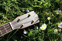 IMG_0259 ( Lettie Photography ) Tags: music color nature daisies garden spring colorful ukulele sunny daisy colored printemps musique sunnyday intruments pquerettes