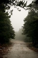 Empty loneliness (aniretak) Tags: trees mountain nature fog forest europe outdoor hiking walk south athens adventure greece emptiness athina attica parnitha attiki