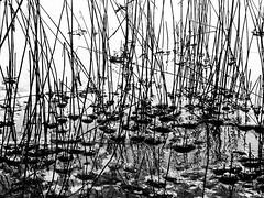 Scrawl On Ice (Kati Conrad) Tags: winter lake ice water frozen blackwhite doodle scrawl scribble