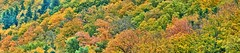 Autumn 01 (Michael J. Woerner) Tags: wood autumn fall forest woodland woods fallcolors fallfoliage foliage blackforest autumnforest mixedforest