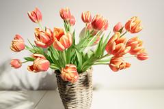 Zeiss_28f1-4Otus_f16_90848 (tombomba2) Tags: flowers plants zeiss bayern deutschland tulips blossom f14 28mm pflanzen blumen apo bloom fullresolution lenses tulpen altdorf blten otus distagon blhen 2814 objektive